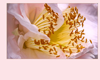 petal_a